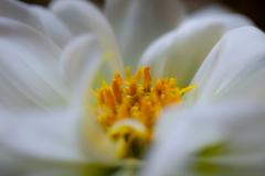 我が庭も春の彩