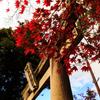 甲賀・八幡神社秋景色