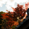 甲賀・大池寺庭園秋景
