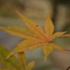 鏡神社の紅葉