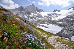 お花畑に沿う登山道