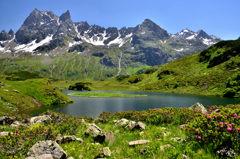 アルペンローゼの咲く湖