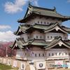 弘前城の桜Ⅱ