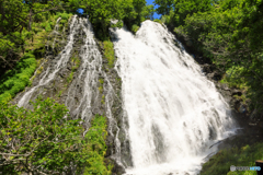 世界自然遺産 「知床」 11