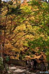 10月の黄葉