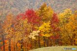 札幌湖の紅葉Ⅰ