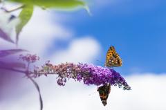 サカサマの蝶
