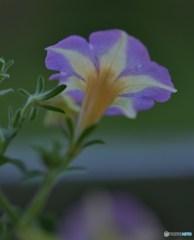 サーカスの花