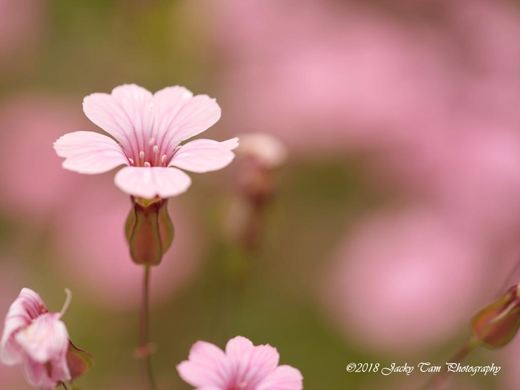 カラフルな花の世界