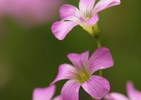 SONY ILCE-7で撮影した(美しい小さな花)の写真(画像)