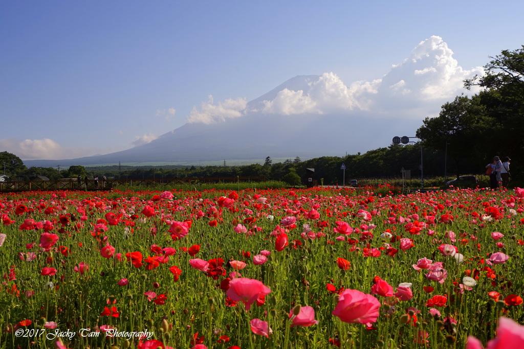富士山は花に囲まれています