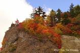 岩の上カエデの葉