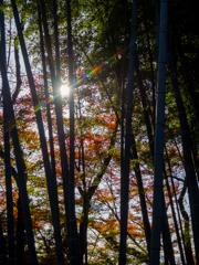 竹林の秋陽