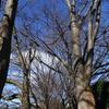 冬の並木道は…