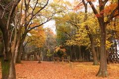 森のアスレチック