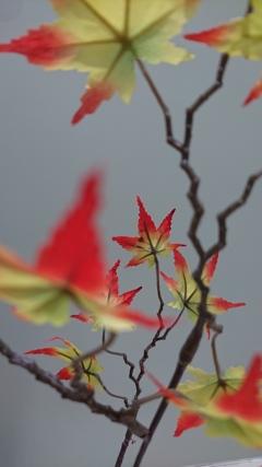 秋ですね (^.^)
