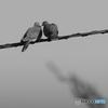 Symbol of peace-1