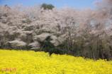 春風に舞う