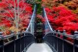 紅に染まる吊橋