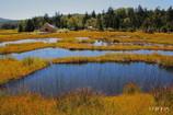 草紅葉と沼尻休憩所