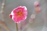 春の日さんさん
