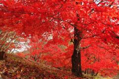 小さな紅葉ドーム