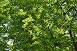 五月の木蔭