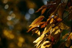 秋深く。。。