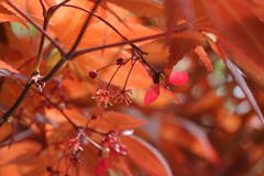 春紅葉の小花