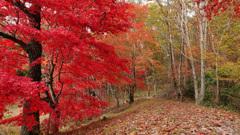 紅葉散策の路