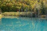 Blue pond in autumn