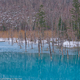 青い池開放
