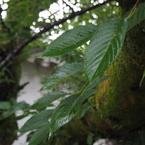 OLYMPUS E-M10で撮影した(雨上がりの木々と葉)の写真(画像)