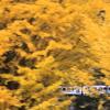 黄葉と三江線