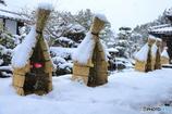 冬咲牡丹Ⅱ