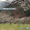 梅園と三江線