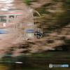 桜と三江線Ⅱ