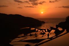 夕日の棚田2