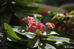 サボテンの花?
