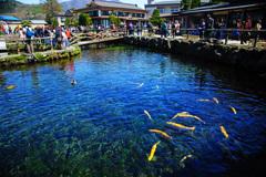 忍野村を訪ねて...忍野八海・中池 ②