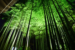 緑の幻想空間