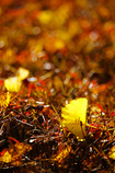 晩秋の良き光に出会えて ⑨