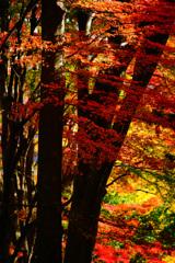 河口湖で紅葉狩り~もみじ回廊 ④