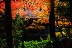 晩秋の妙本寺~艶やかなり
