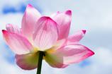 天空に咲く蓮華