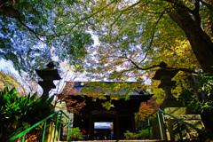 晩秋の妙本寺山門