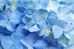 ブルーの季節がやって来たね ②