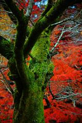 深緑と深紅の魅せられて ①