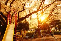 ブランコに乗れば桜が目の前に…そだね