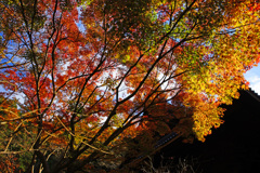 晩秋の妙本寺~紅葉の見納めに